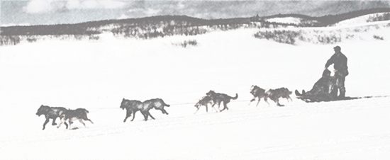sled dog team pulling a sled